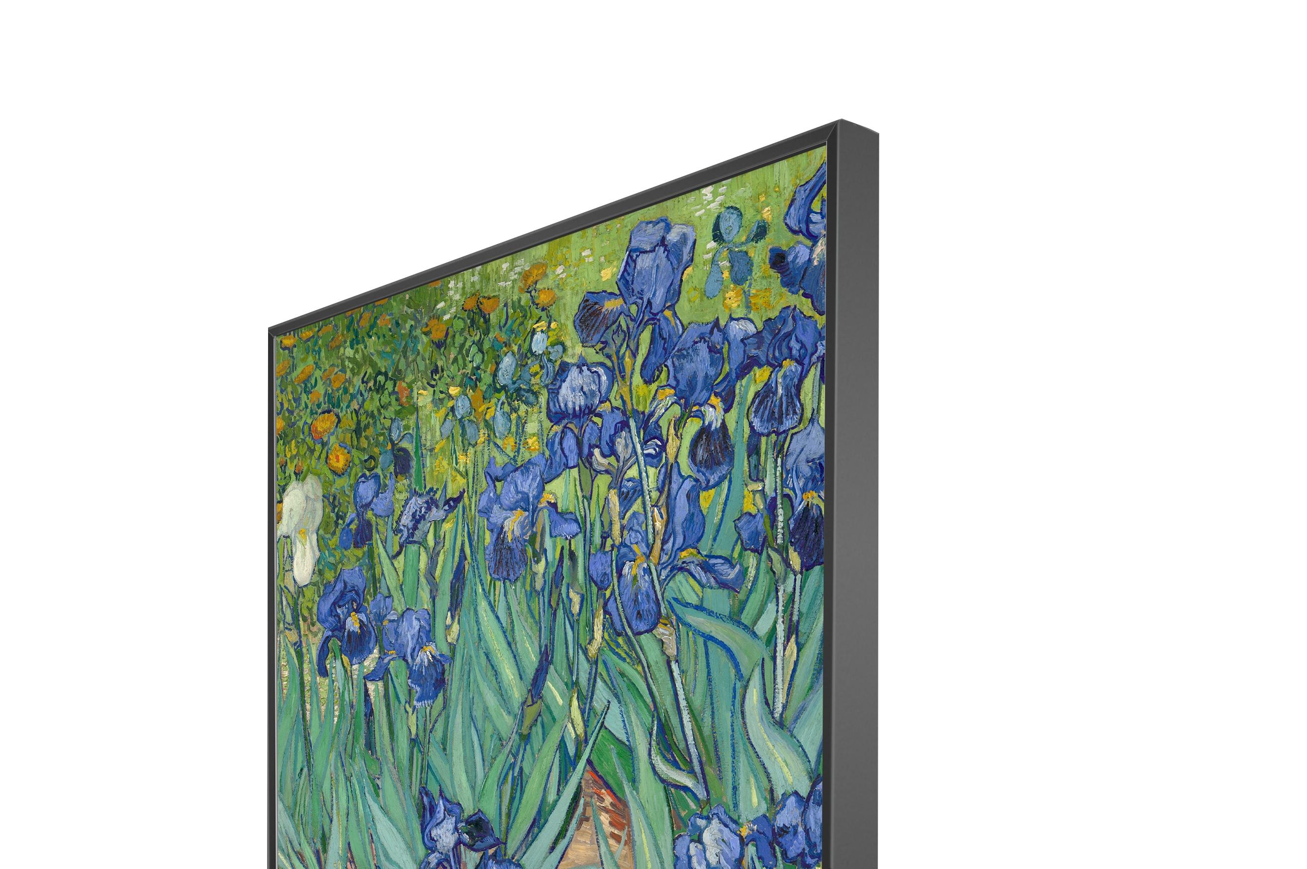 Irises Sleek