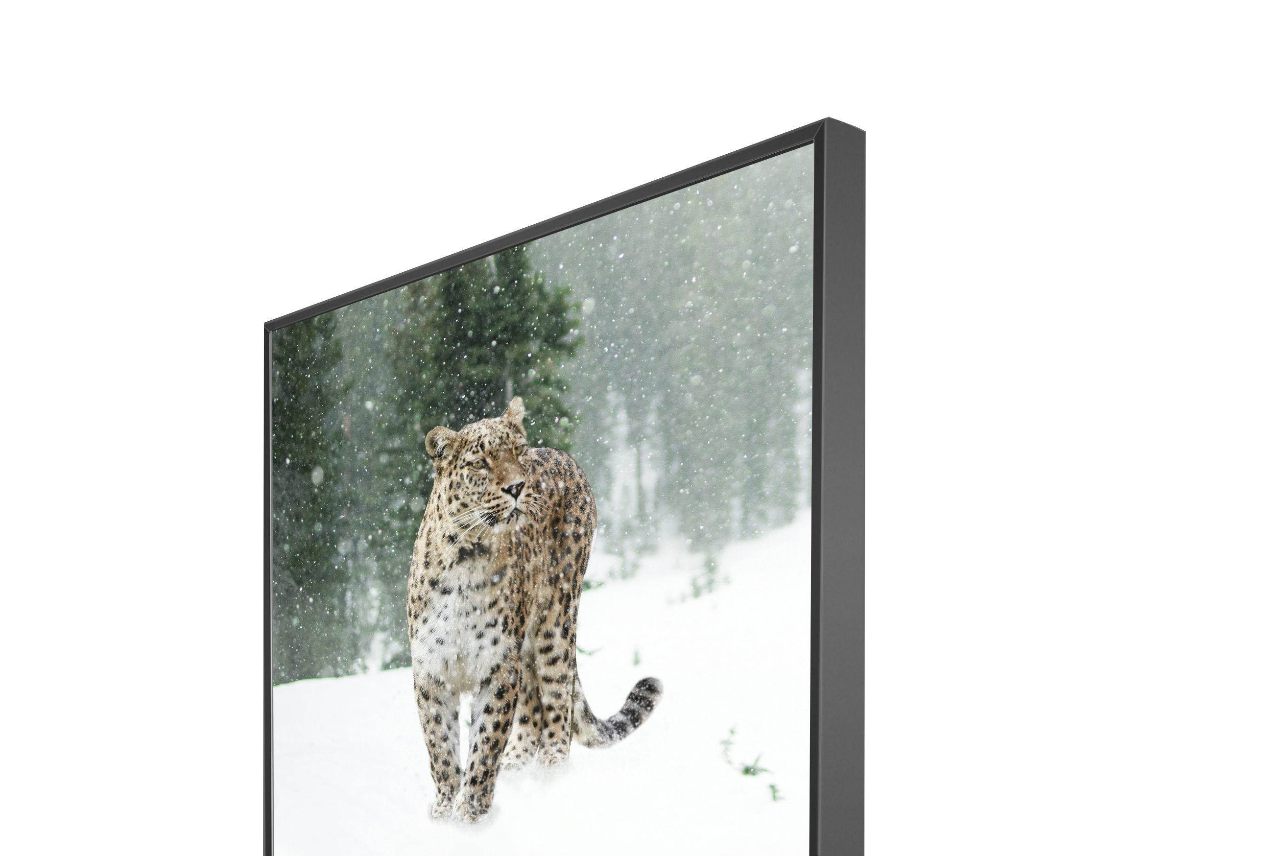 Persian Leopard Sleek
